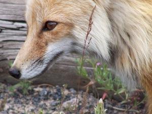 Yellowstone 2009 184