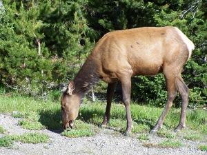 Yellowstone 2009 082